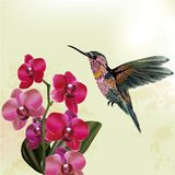 Fashion  floral background with orchid and hummingbird Stock Photo