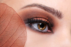 Fashion glamour brown eye make-up Royalty Free Stock Image