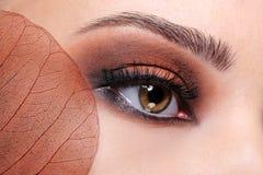 Fashion glamour brown eye make-up Royalty Free Stock Image
