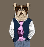 Fashion man with the head of French Bulldog Stock Image
