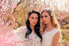 Beautiful  women in elegant dresses posing among flowering peach trees in garden royalty free stock image