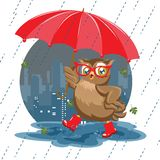 Fashion owl under an umbrella in the rain. Fashion owl under an umbrella on a white background Royalty Free Stock Photography