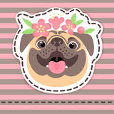 Fashion patch badges happy pug in flower crown on striped background. royalty free illustration