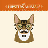 Fashion Portrait of Hipster Cat with glasses and Stock Photo