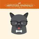 Fashion Portrait of Hipster Cat with glasses and Stock Image