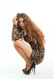 Fashion portrait of young brunette girl in leopard dress Stock Image