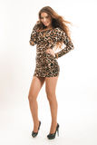 Fashion portrait of young brunette girl in leopard dress Stock Photography
