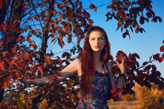 Fashion portrait of young hippie woman walking in autumn field. Romantic sunny evening.  Royalty Free Stock Photos