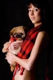 Fashion puppy stock photography