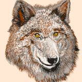 Fashion T-shirt print with vector drawn wolf Stock Photo