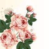 Fashion vector background with roses in vintage style. Floral background with pink pastel roses in vintage style Royalty Free Stock Images