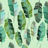 Fashion vector illustration tropical banana plants Royalty Free Stock Image