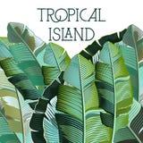 Fashion vector illustration tropical plants Stock Photography