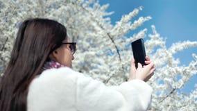 Fashion woman enjoying walking in park taking photo beautiful blooming white sakura tree using smartphone. Fashion woman enjoying walking in park taking photo of stock footage