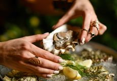 Fashion woman hands with expensive gold rings take oyster. With lemon and dill Royalty Free Stock Photos
