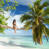Woman siting upon palm tree on the beach Stock Photos