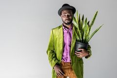 Fashionable african american man in hat with green plant in flowerpot in hand posing. Isolated on grey stock image