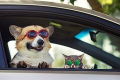 Free Fashionable And Funny Dog and Cat In Sunglasses Leaned Out Of The Car Window During A Vacation Trip Royalty Free Stock Images - 194609039