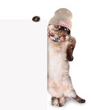 Fashionable cat behind a banner. Stock Photo