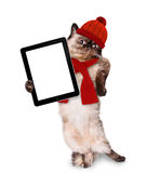 Fashionable cat holding a blank tablet. Royalty Free Stock Photo