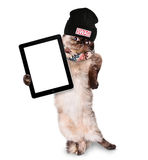 Fashionable cat holding a blank tablet. Stock Images