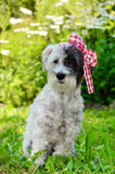 Fashionable dog with red ribbon Stock Photo