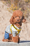 Fashionable dressed dog poses in autumn sun, Beijing, China stock images