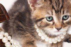 Fashionable kitten Stock Photos