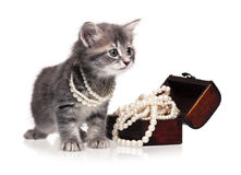 Fashionable kitten Stock Image
