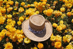 Fashionable ladies' straw hat Royalty Free Stock Image