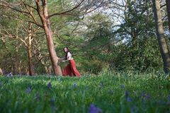 Fashionable lady holds a tree in an English woodland in early spring, with bluebells in the foreground royalty free stock photos