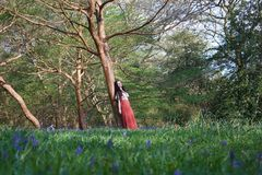 Fashionable lady leans against a tree in an English woodland in early spring, with bluebells in the foreground stock images