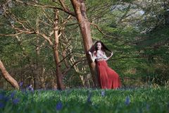 Fashionable lady leans against a tree in an English woodland in early spring, with bluebells in the foreground royalty free stock photo