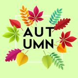 Fashionable modern autumn background with bright autumn leaves for design   Stock Photography