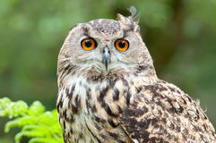 Fashionable owl Royalty Free Stock Images