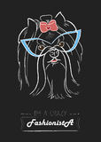 Fashionista τεριέ του Γιορκσάιρ Στοκ εικόνα με δικαίωμα ελεύθερης χρήσης