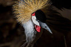 Fashionista Crane Royalty Free Stock Photography