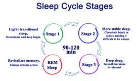 Fasi del ciclo di sonno illustrazione vettoriale