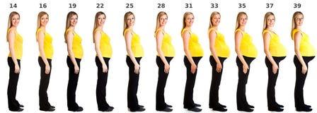 Fasi della gravidanza Immagine Stock