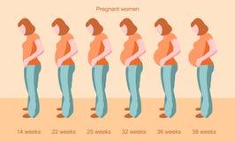 Fasi della gravidanza femminile Fotografia Stock