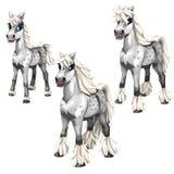 Fasi di coltura del cavallo grigio con una criniera bianca illustrazione vettoriale