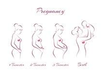 Fasi di gravidanza Fotografia Stock