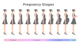Fasi di gravidanza dalla guida di inizio fino alla nascita Immagine Stock