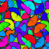 Fasinating colorful background made of Blue Morpho butterflies  Royalty Free Stock Photos