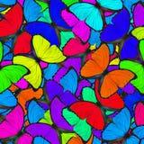 Fasinatings kleurrijke die achtergrond van Blauwe Morpho-vlinders wordt gemaakt royalty-vrije stock foto's