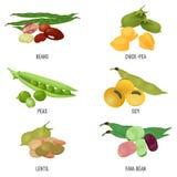 Fasola gatunki ustawiają, zdrowy i odżywczy naturalny jedzenie, ilustracji