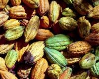 fasola kakaowe Fotografia Stock