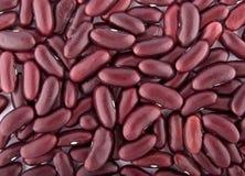 fasole czerwone fotografia royalty free
