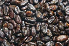 fasole kakaowe zdjęcie royalty free