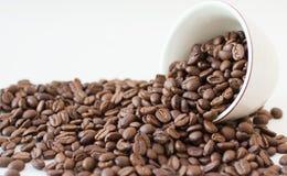 fasole kawowe Zdjęcie Stock